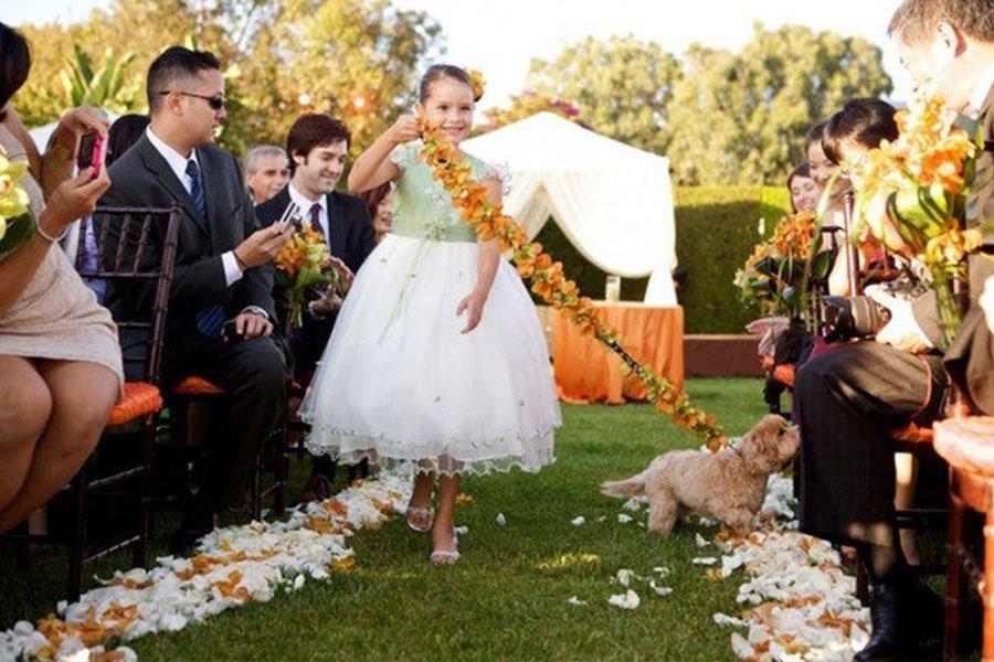 pet-pointers-flowergirl-walking-puppy-down-aisle-ira-lippke